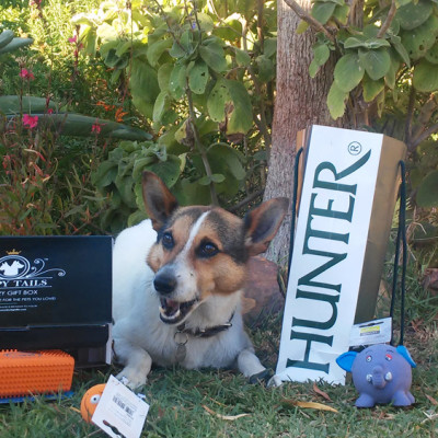 Happy dog with his Happy Tails Box