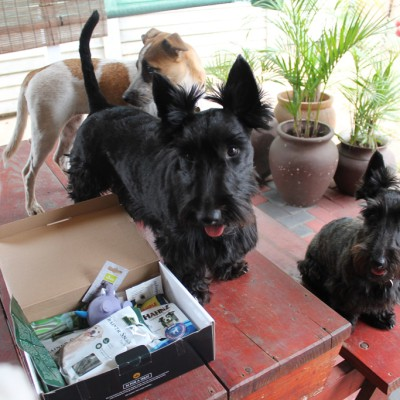 Sadie, Riley, Chloe and the Happy Tails Box