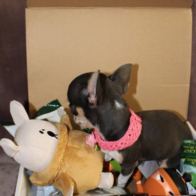 A happy customer inside her Happy Tails Box